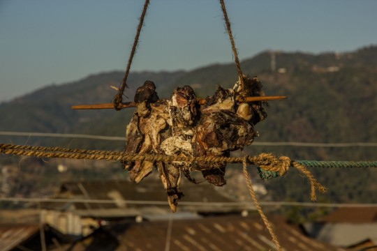 Beef put out to dry